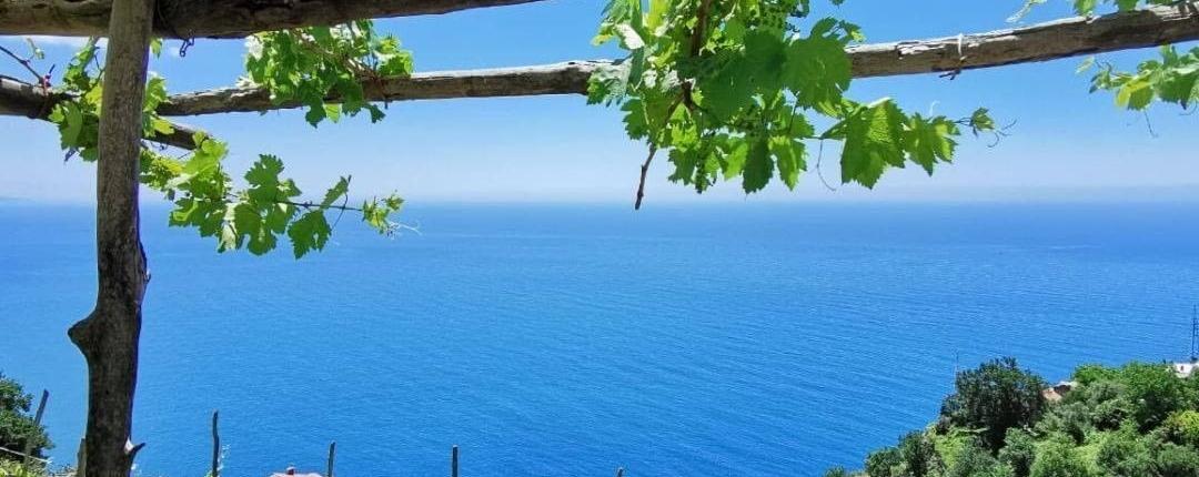 Furore vineyard vines overlooking the Thyrrenian Sea