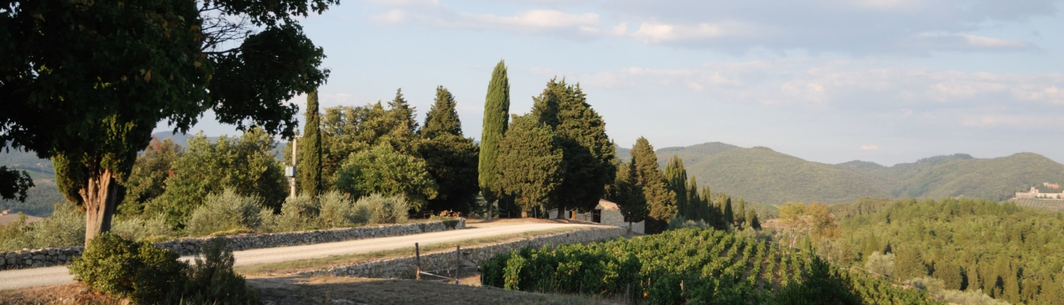 Tuscan landscape with cypress trees and vineyears Gaiole