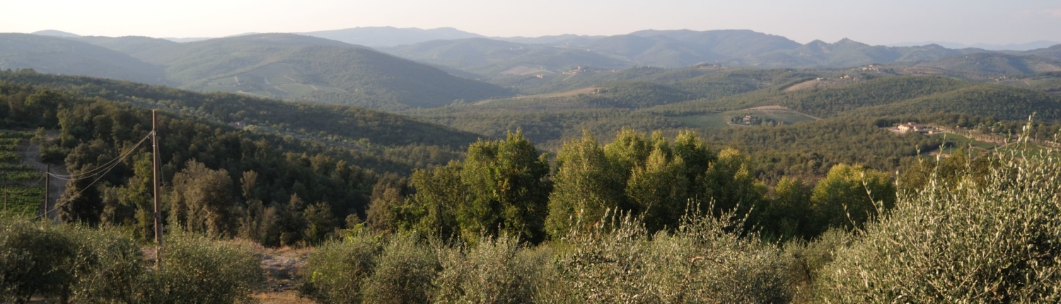 Tuscan landscape olive trees and hills Gaiole
